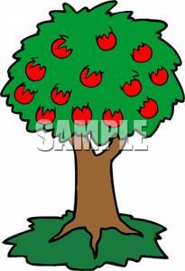 Mature Apple Tree.