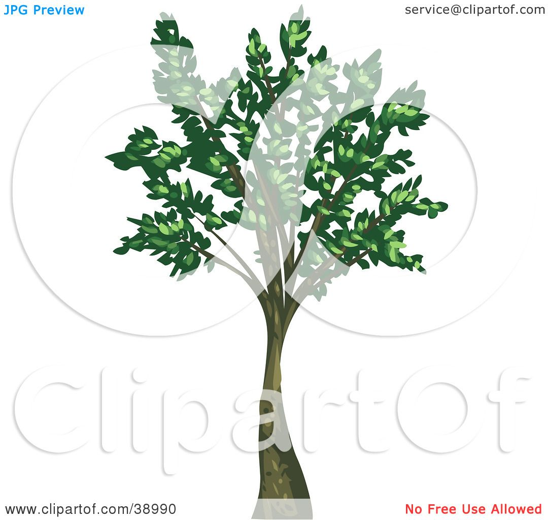 Clipart Illustration of a Tall Mature Tree With Green Leaves.