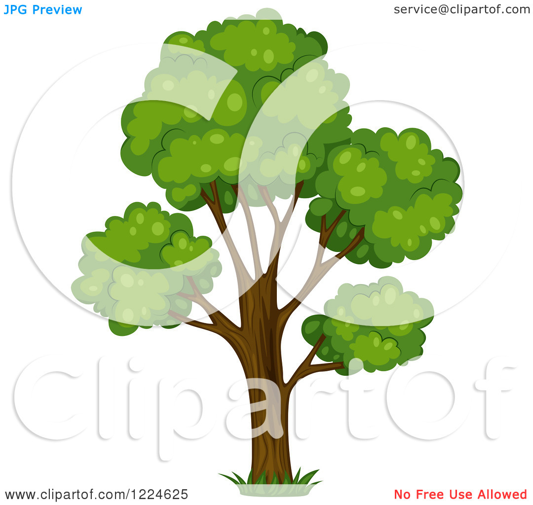 Clipart of a Mature Tree.