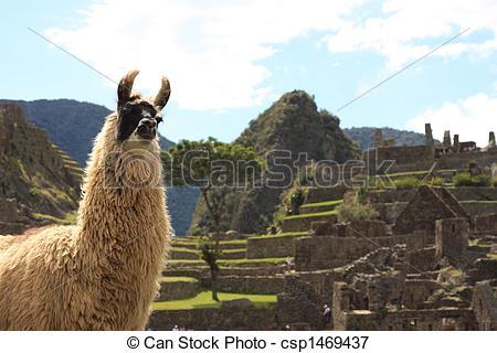 Picture of Llama at Machu Picchu.