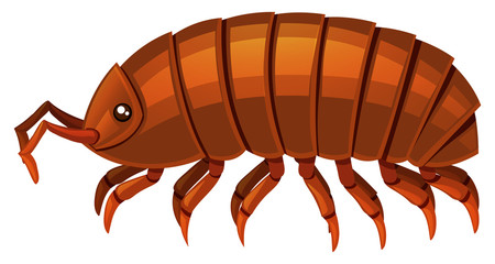 Search photos woodlouse.