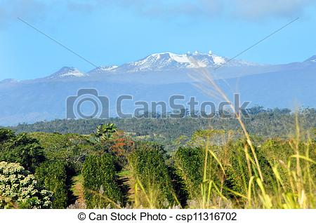 Stock Photography of Mauna Kea on clear day.