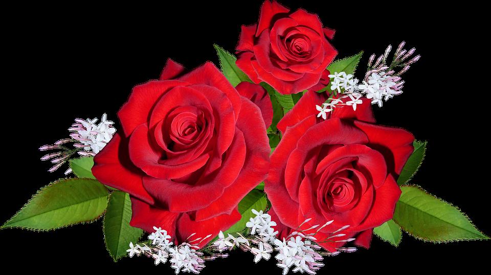 Mawar Merah Bunga.
