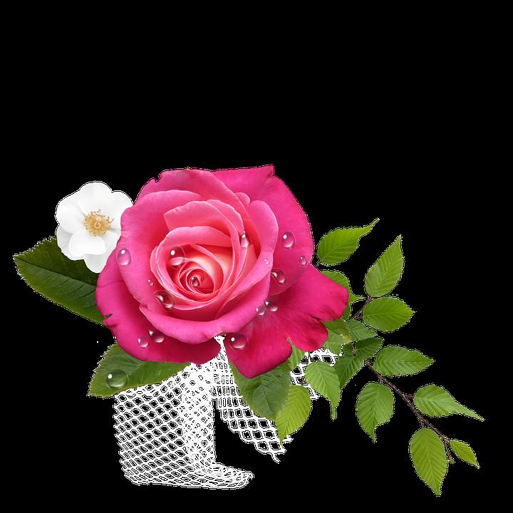 Mawar png 5 » PNG Image.