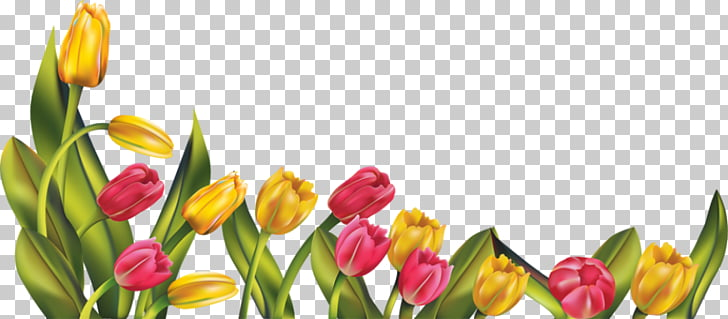 Spring Flower Free content , May Border s PNG clipart.
