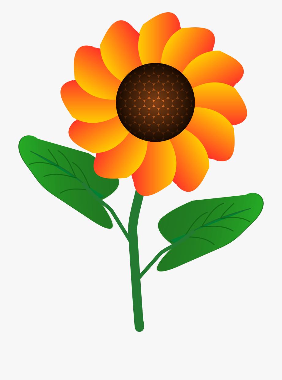 Flower By.