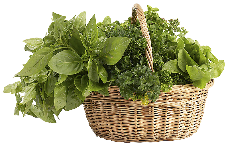 Herbs PNG Clipart.