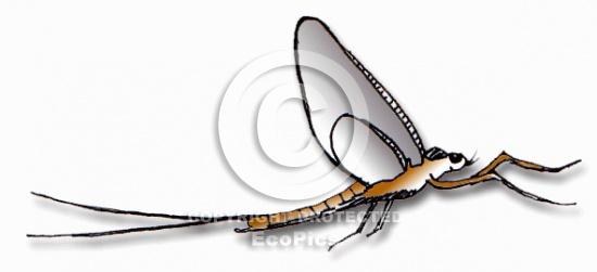 Mayfly clip art.