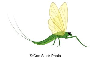 Mayfly Illustrations and Clip Art. 94 Mayfly royalty free.