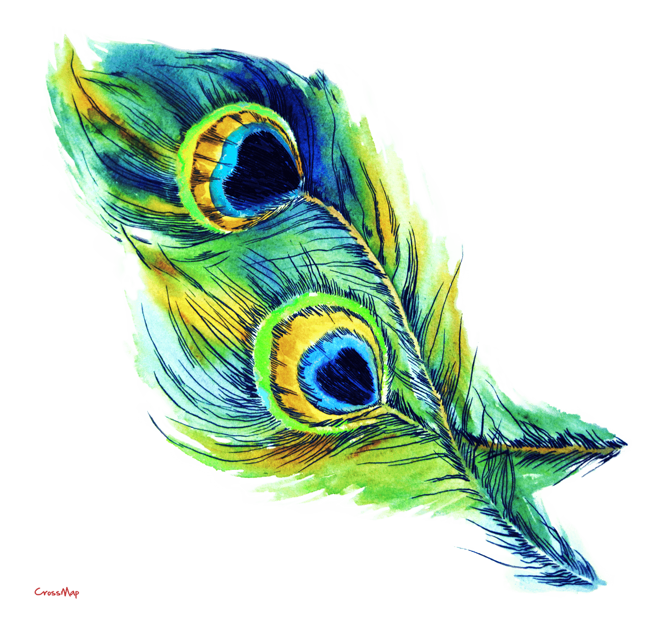 Wallpapers Of Peacock Feathers HD 2017.