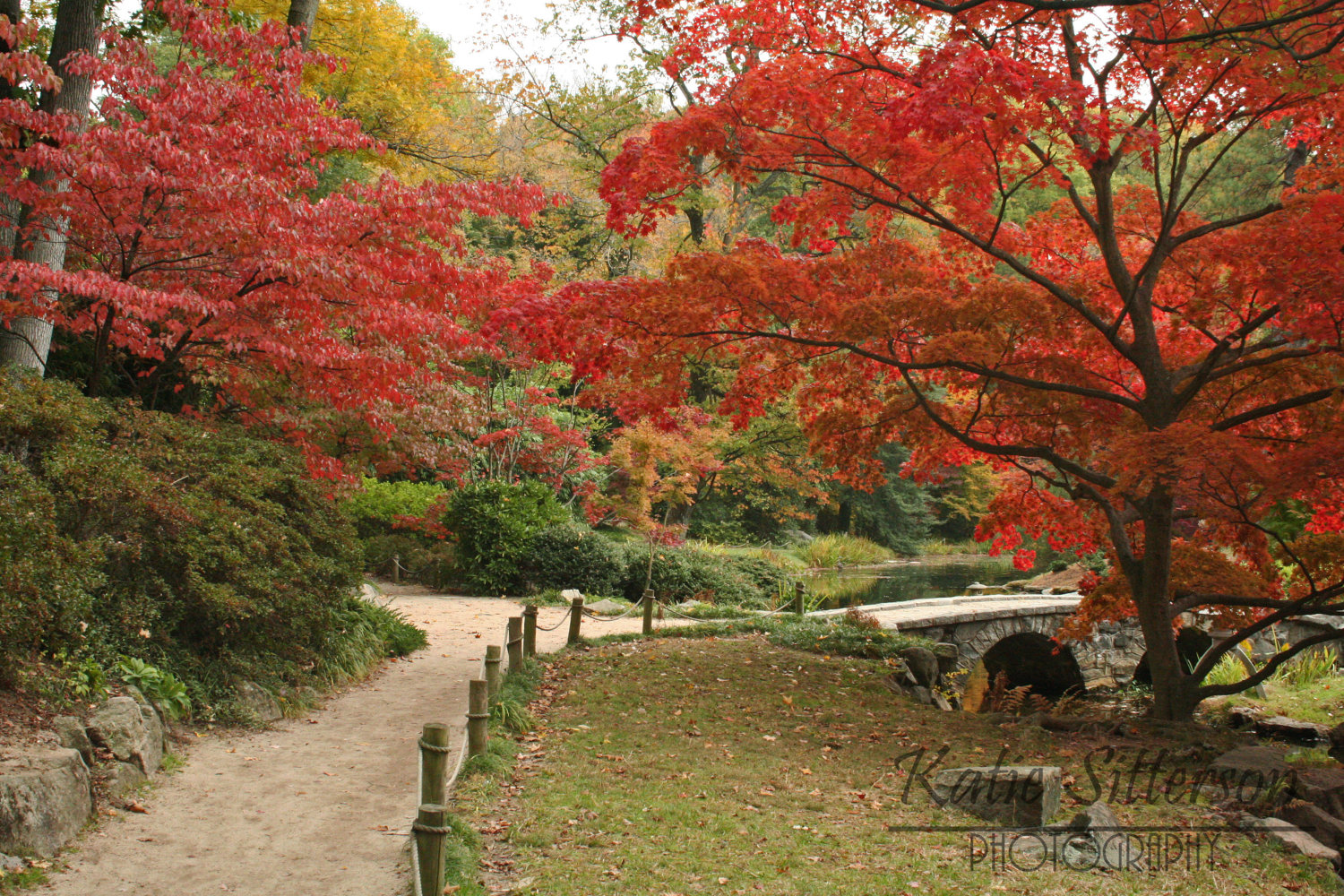 SALE Fall Landscape Photo Foliage Pathway at Maymont Park in by.