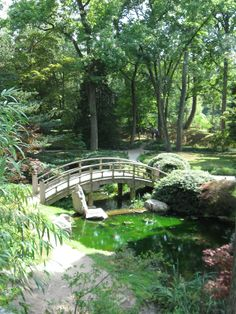recall school trips to the Japanese Gardens at Maymount Park in.