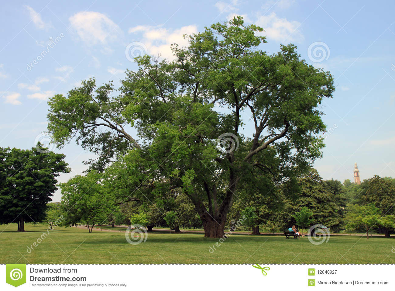Tree In Maymont Park Royalty Free Stock Photography.