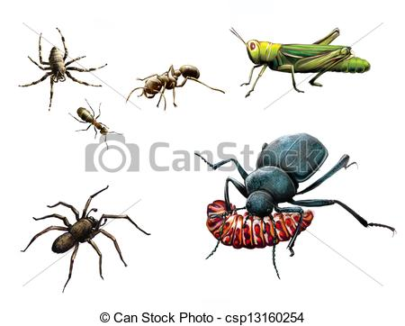 Stock Illustrations of Insects: bee, ants, ground beetle eating.