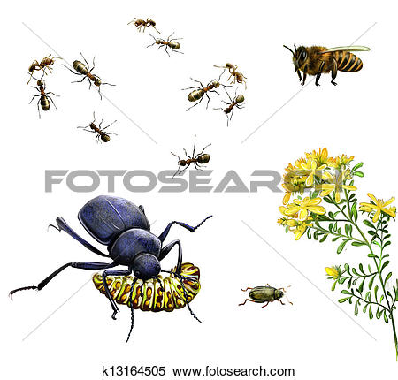 Stock Illustration of Insects: bee, ants, ground beetle eating.