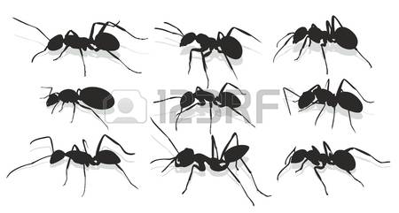 177 Species Ants Stock Vector Illustration And Royalty Free.