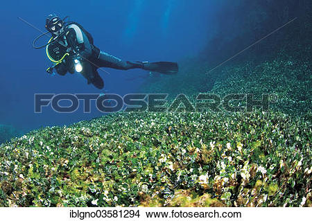 Meadow coral clipart #9