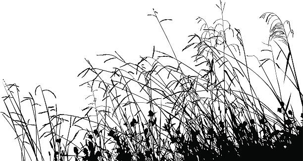 Prairie Grass Clip Art, Vector Images & Illustrations.