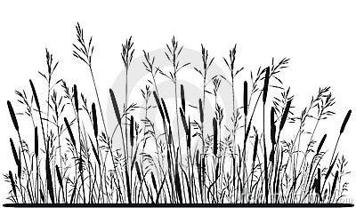 Silhouette Of Meadow Grass Stock Image.