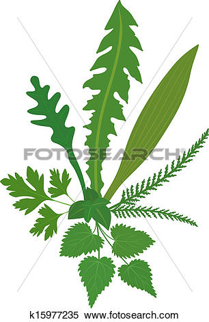 Clipart of Meadow Herbs k15977235.