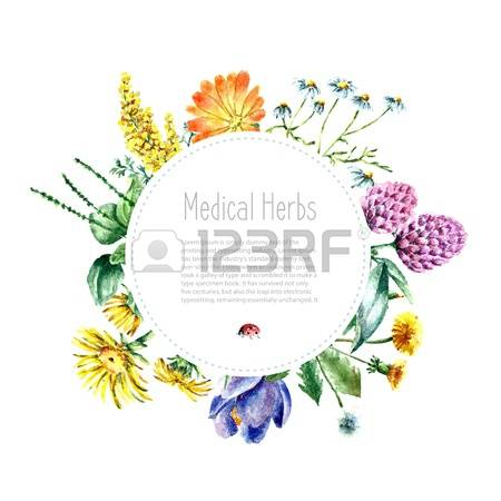 9,530 Meadow Herbs Cliparts, Stock Vector And Royalty Free Meadow.