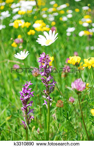 Stock Photography of mountain meadow k3310890.