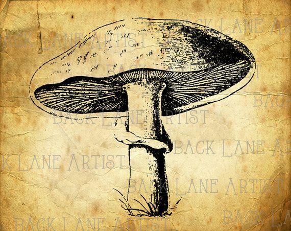 Vintage Meadow Mushroom Vegetables Clipart Lineart Illustration.