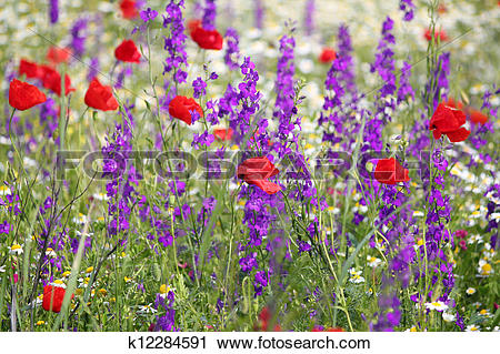 Stock Photography of spring meadow with wild flowers k12284591.