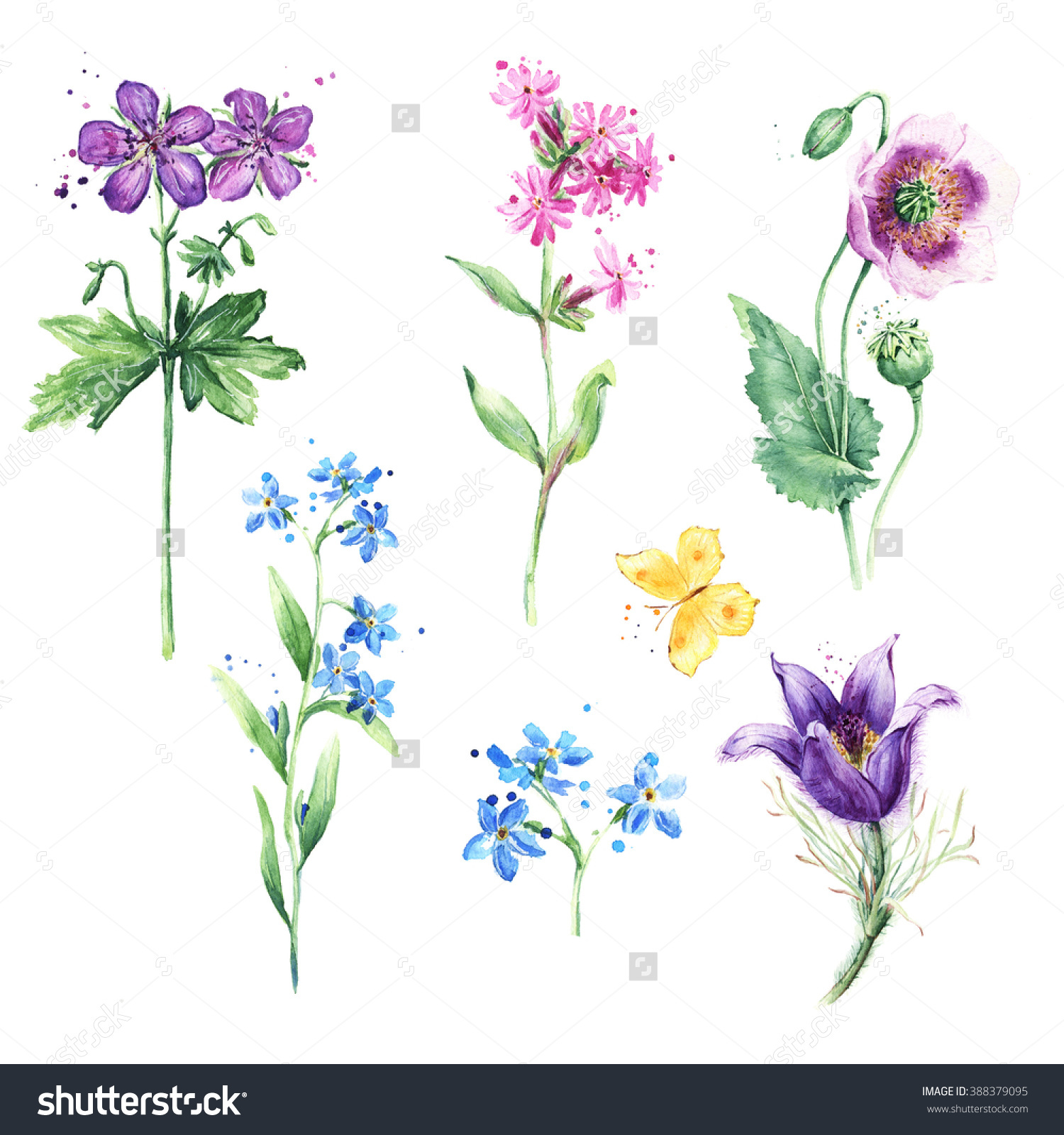 Meadow Floral Set Collection Wild Flowers Stock Illustration.