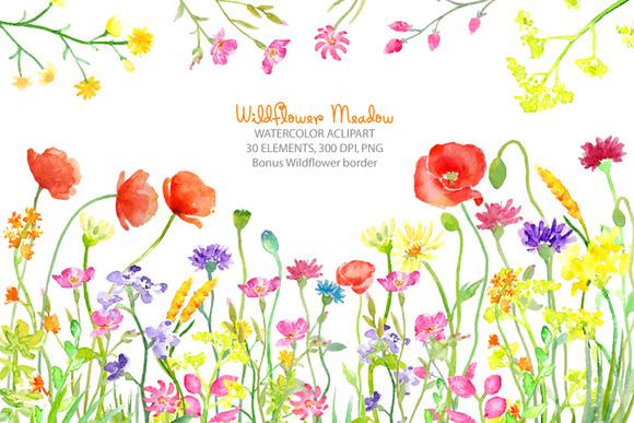Watercolor Wild flower Meadow.