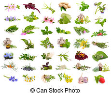 Medicinal plants Stock Illustration Images. 3,402 Medicinal plants.