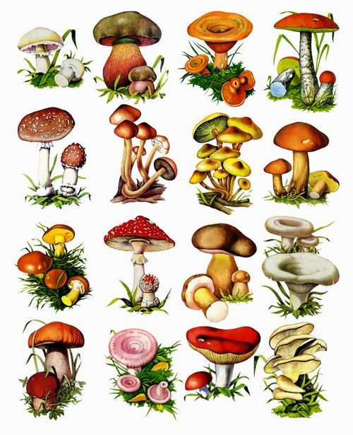 Mushrooms Clipart png images download (142 png images).