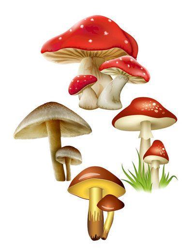 1000+ ideas about Mushroom Images on Pinterest.