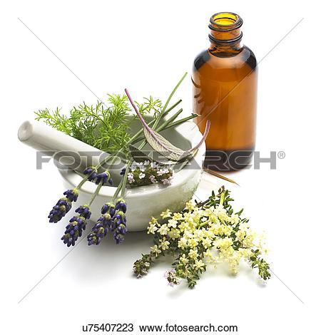 Medicinal plants Stock Photos and Images. 42,152 medicinal plants.