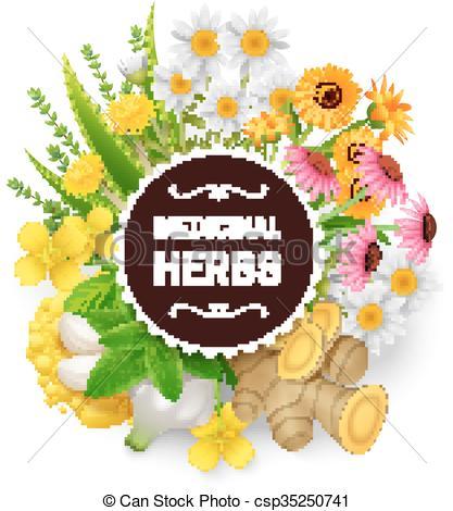 EPS Vector of Medicinal Herbs Plants Wreath Flat Frame.