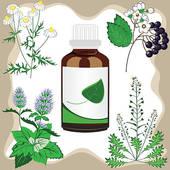Medicinal Plant Clip Art.