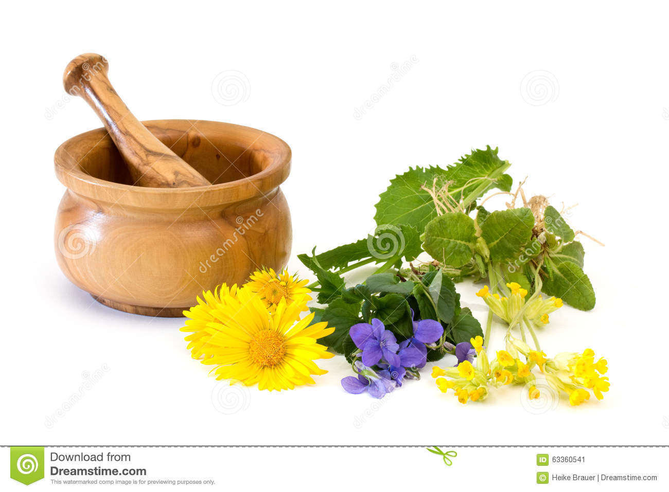 Medicinal Plants With Mortar And Pestle Stock Photo.