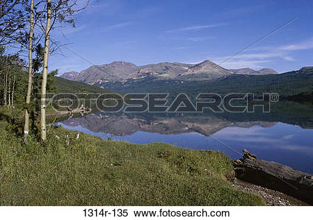 Stock Image of Trees at Two Medicine Lake, Glacier Bay National.