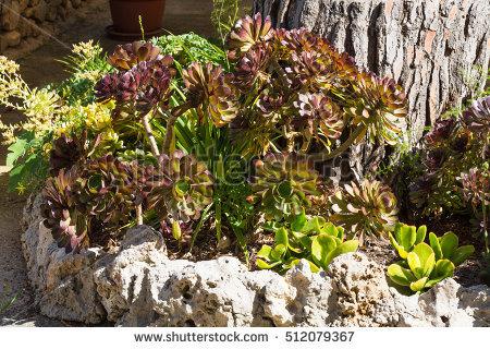 Mediterranean Species Stock Photos, Royalty.