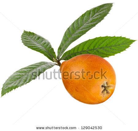 Loquat Medlar Fruit Isolated On White Stock Photo 102960356.