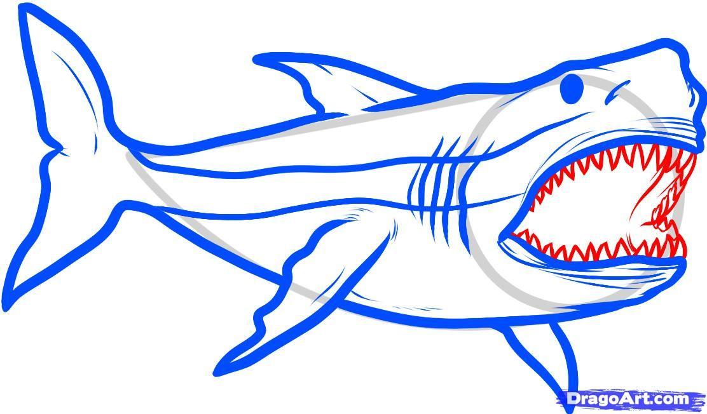 how to draw megalodon, megalodon shark step 5 in 2019.