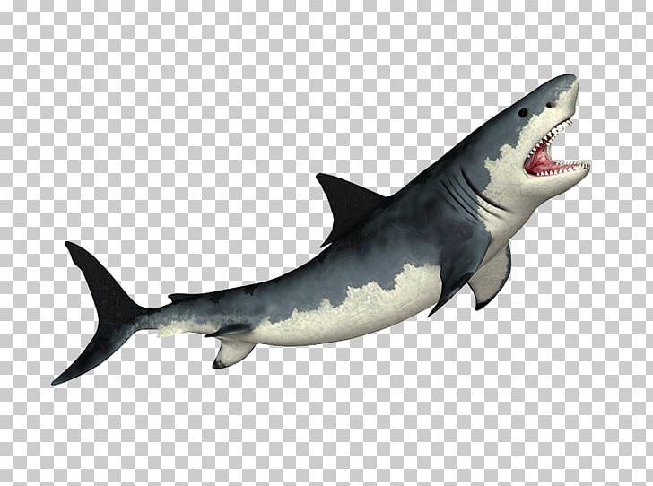 Tiger Shark Megalodon Shark Fin Soup Great White Shark PNG.