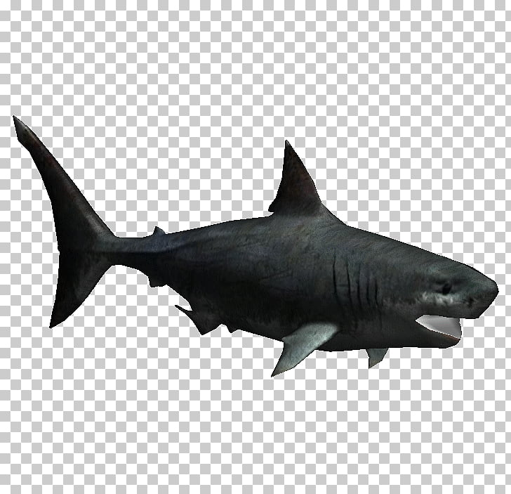 Megalodon Great white shark Fish Zoo Tycoon 2 Chondrichthyes.