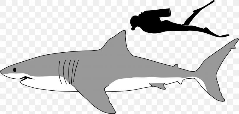 Great White Shark Megalodon Lamniformes Tiger Shark Clip Art.