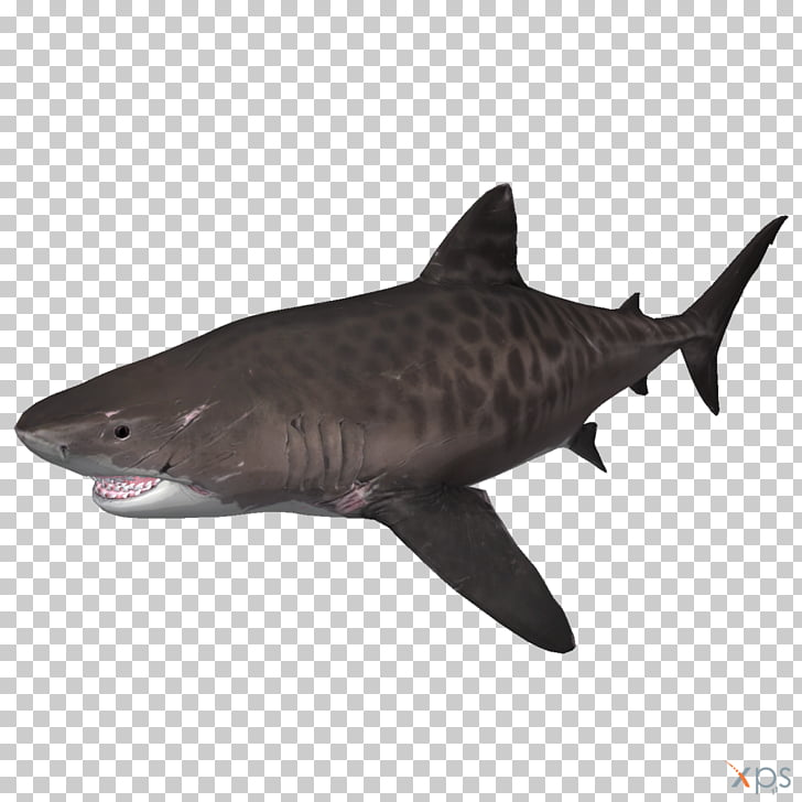 Tiger shark Depth Megalodon, shark PNG clipart.