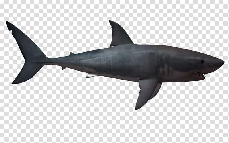 Megalodon Hungry Shark World Hungry Shark Evolution Great.