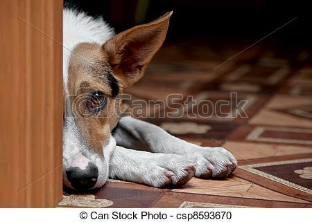 Stock Photography of dog melancholy.