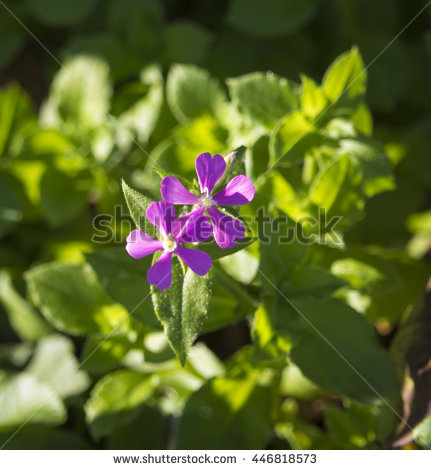 Biennial Plant Stock Photos, Royalty.