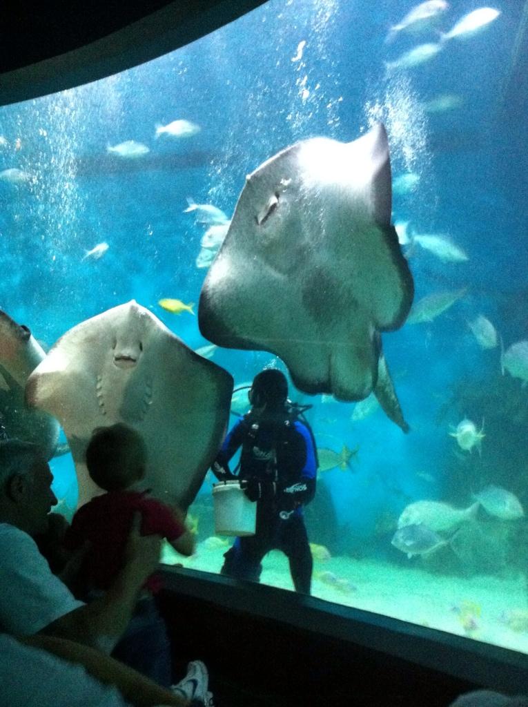 Be ye pirates at the The Melbourne Aquarium….