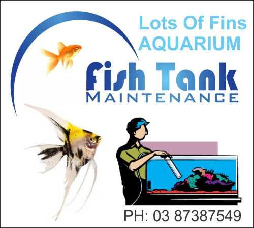 Tank Maintenance/Servicing/Setup.